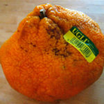 ugli-fruit