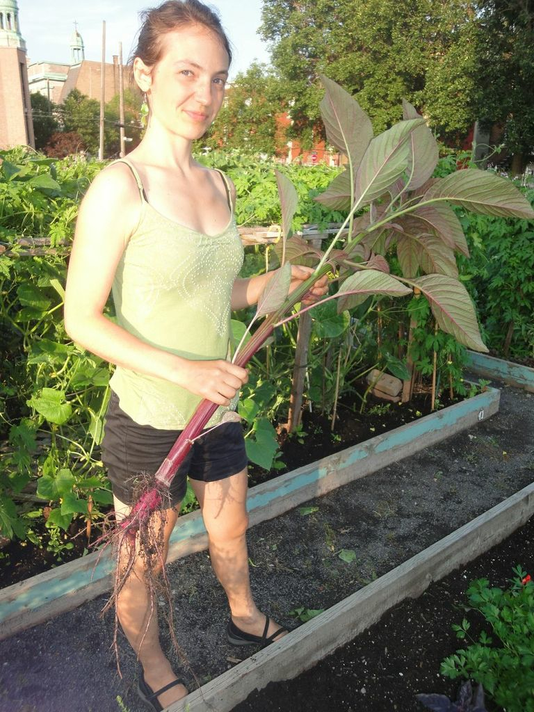 me in community garden with indian drumstick
