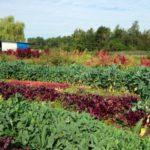 hannah-brook-farms