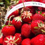 Strawberry Fields Forever…