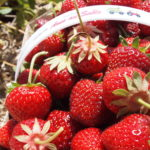 Canning Class This Monday: Learn to Make Strawberry Jam